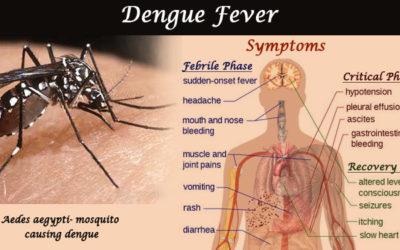 Dengue-Fever-banner