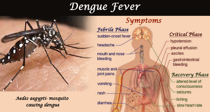 dengue virus essay in english Home » a, free english essay a short essay on dengue read this short essay about dengue these days many people are experiencing dengue.