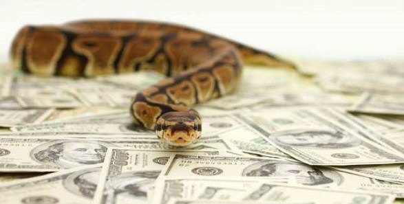 snake-dollars